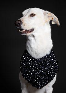 DOG_SESSIONS_10289