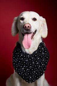 DOG_SESSIONS_10367